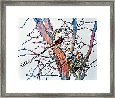 Da149 Scissortailed Flycatchers By Daniel Adams Framed Print