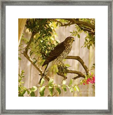 Framed Print featuring the photograph Scoping by Roseann Errigo