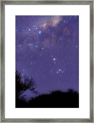 Scorpius Framed Print by Luis Argerich
