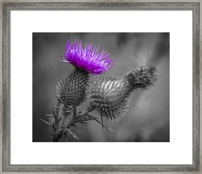 Scotland Calls 1 Framed Print by Scott Campbell