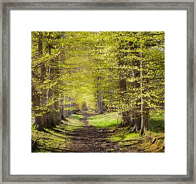 Scotland Grove Framed Print