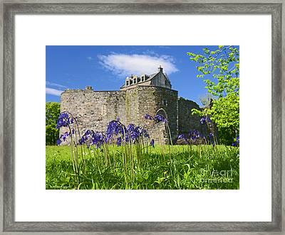 Scots Spring Bluebell Flowers At Scotland Dunstaffnage Castle  Framed Print