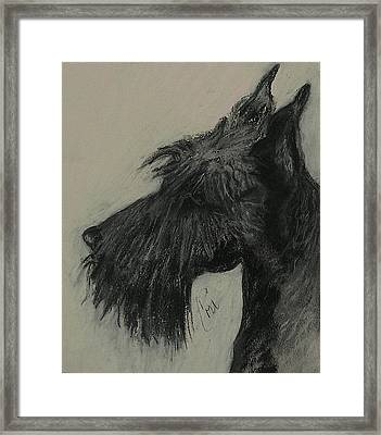 Scottish Delight Framed Print by Cori Solomon