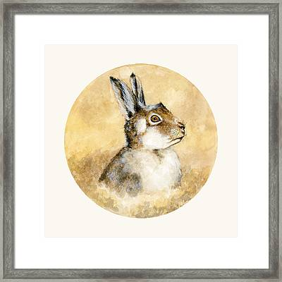Scottish Hare Framed Print by Nathalie Amber