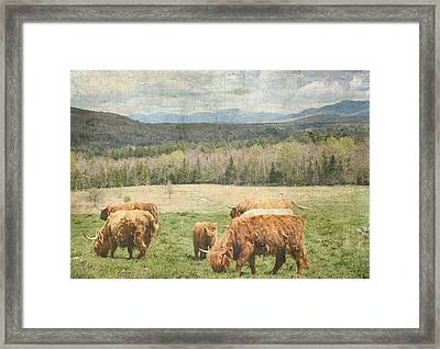 Scottish Highland Grazing  Framed Print