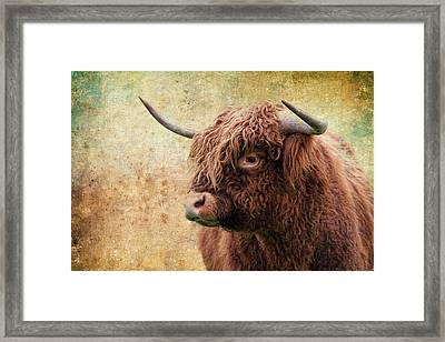 Scottish Highland Steer Framed Print by Steve McKinzie