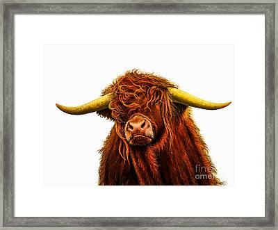 Scottish Highlander Framed Print by Jurek Zamoyski