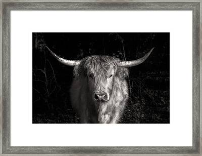 Scottish Highlander Framed Print by Robert  FERD Frank
