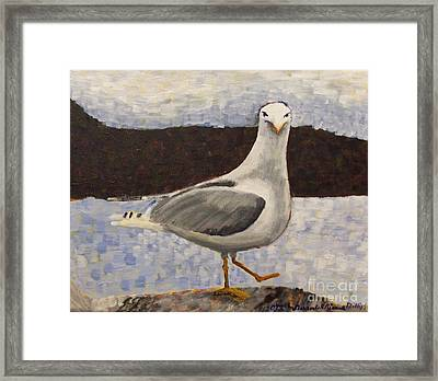 Scottish Seagull Framed Print