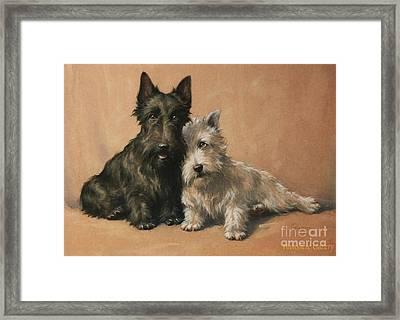 Scottish Terrier Framed Print