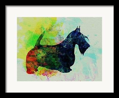 Scottish Terrier Puppy Framed Prints