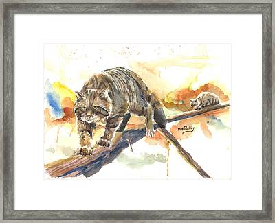 Scottish Wildcat Tom Framed Print