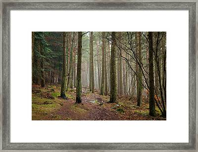 Scottish Woods Framed Print