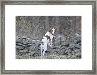 Scout Framed Print by Sally Rice