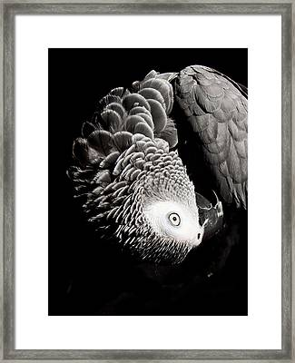 Scratch Me Framed Print by Paulina Szajek