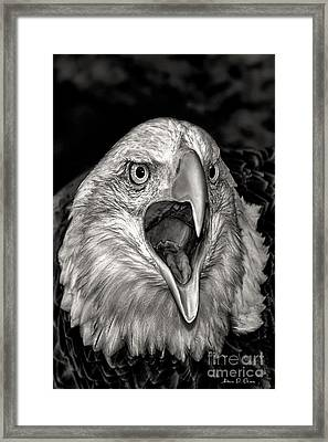 Screamin Eagle Framed Print