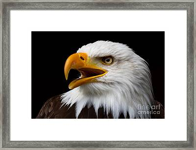 Framed Print featuring the photograph Screaming Bald Eagle by Nick  Biemans