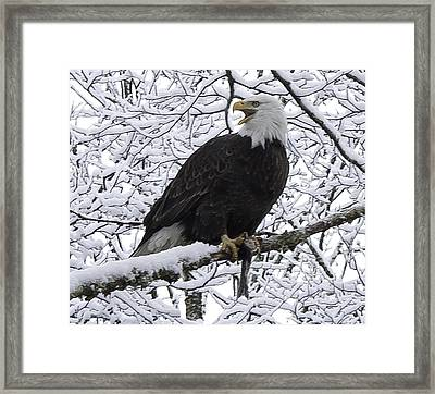 Framed Print featuring the pyrography Screaming Eagle by Timothy Latta