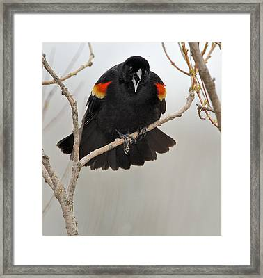 Screaming Meenie Framed Print