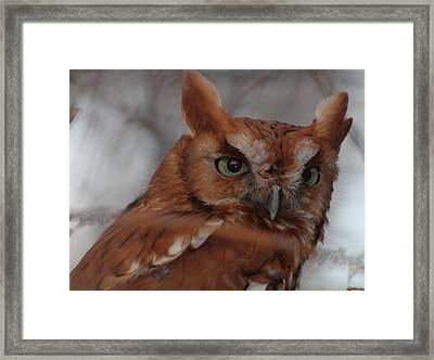 Framed Print featuring the photograph Screech Owl by Constantine Gregory