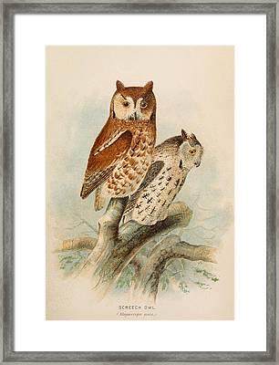 Screech Owls Framed Print by Rob Dreyer