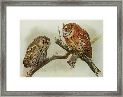 Screech Owls Framed Print by Anton Oreshkin