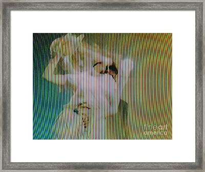 Screen #519 Framed Print