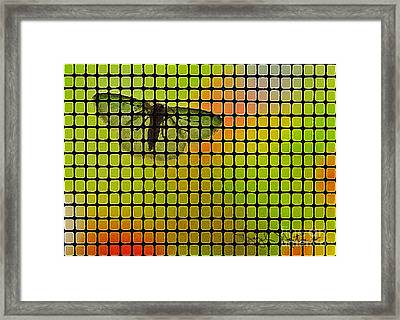Screened Moth Framed Print