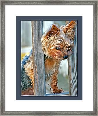 Scruffy Yorkie Framed Print