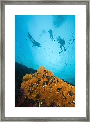 Scuba Divers, Richelieu Rock, Mu Koh Framed Print