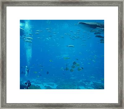 Scuba Diving Framed Print by Dan Sproul