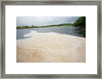 Scum Floating On The River Ribble Framed Print by Ashley Cooper