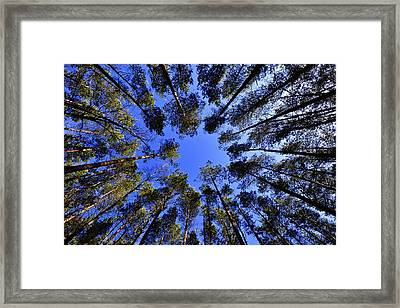 Scuse Me While I Kiss The Sky  Framed Print by Movie Poster Prints