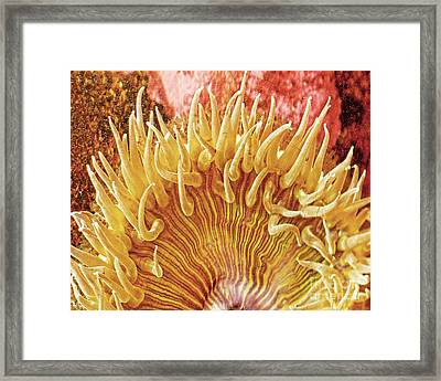 Sea Anenome Stretch Framed Print