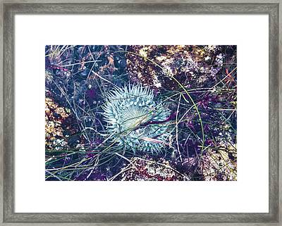 Framed Print featuring the mixed media Sea Anenome - Terrestrial Flower by Terry Rowe