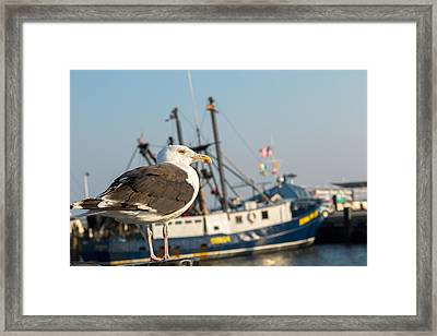 Sea Bird Framed Print
