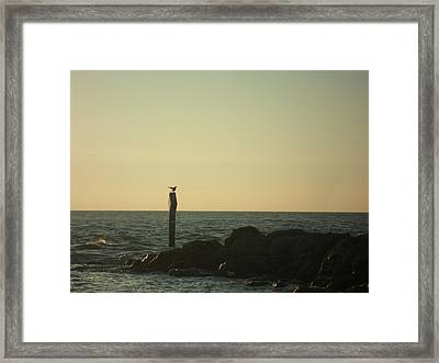 Sea Bird Landing Framed Print