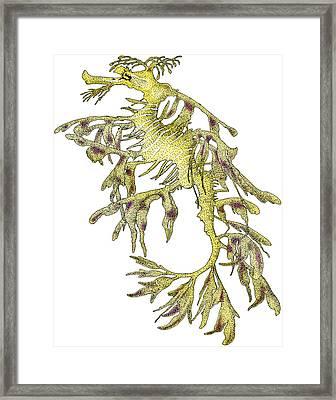 Sea Dragon Framed Print by Roger Hall