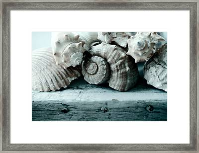 Sea Gifts Framed Print by Bonnie Bruno