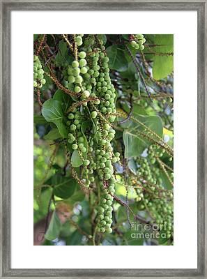 Sea Grapes Framed Print