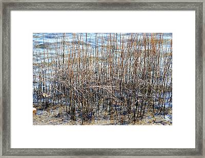 Framed Print featuring the photograph Sea Grass by Judy Palkimas