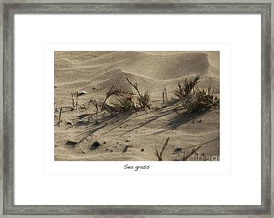 Sea Grass Framed Print by Artist and Photographer Laura Wrede