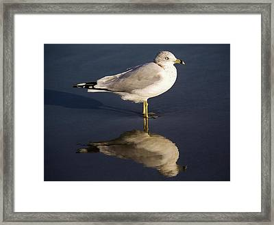 Sea Gull Reflection Framed Print by Paulette Thomas