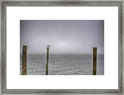 Sea Gull Framed Print
