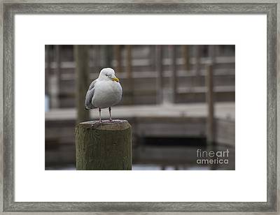 Sea Gull Framed Print by Twenty Two North Photography