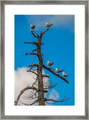 Sea Gulls Hangin Out Framed Print