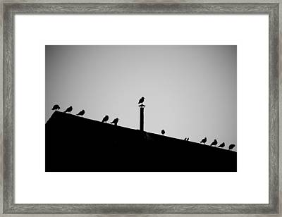 Sea Gulls In Silhouette Framed Print