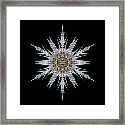 Sea Holly I Flower Mandala Framed Print