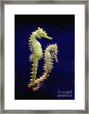 Sea Horse Framed Print by Boon Mee