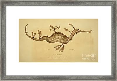 Sea Horse Framed Print by Busby